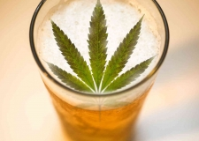 Engineering for the Exotic: Considerations for Cannabis Brews